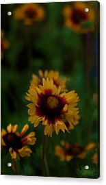 Acrylic Print featuring the photograph Ruffled Up by Cherie Duran