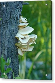 Ruffles On The Tree Acrylic Print
