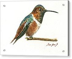 Rufous Hummingbird Watercolor Acrylic Print
