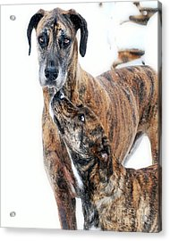 Acrylic Print featuring the photograph Rufus And Ava by Lila Fisher-Wenzel