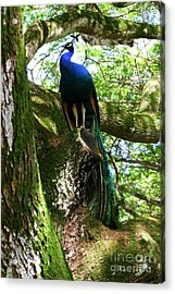 Ruler Of The Roost Acrylic Print by Mary Deal