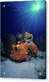 Rum Cay Rainbow Acrylic Print