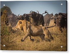 Running For His Life Acrylic Print by Marc Meijlaers
