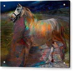 Running Horse Acrylic Print by Henriette Tuer lund
