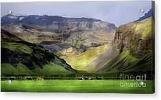 Running Horses Iceland Acrylic Print by Louise Fahy