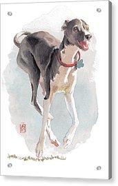 Running Italian Acrylic Print by Debra Jones