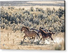 Running Mustangs, No. 1 Acrylic Print