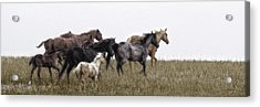 Running On November's Wind Acrylic Print