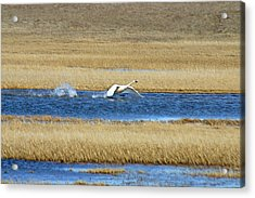 Running On Water Acrylic Print by Anthony Jones