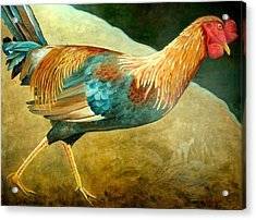 Running Rooster Acrylic Print by Scott Plaster