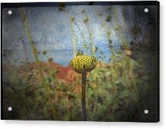 Acrylic Print featuring the photograph Runt  by Mark Ross