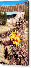 Rural Attitude Acrylic Print by James Granberry