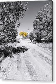 Rural Autumn Splash Acrylic Print
