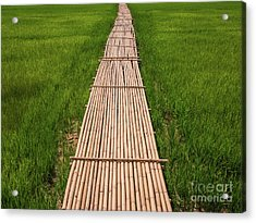 Acrylic Print featuring the photograph Rural Green Rice Fields And Bamboo Bridge. by Tosporn Preede