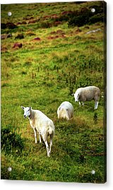 Acrylic Print featuring the photograph Rural Idyll. Wicklow. Ireland by Jenny Rainbow