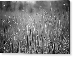 Rushes Acrylic Print
