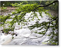 Rushing River Acrylic Print by Thomas R Fletcher
