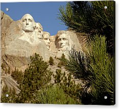 Rushmore Pine Needles Acrylic Print by Mike Oistad