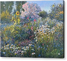 Acrylic Print featuring the painting Russian Olive Among Daisies by Steve Spencer
