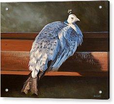 Rustic Elegance - White Peahen Acrylic Print