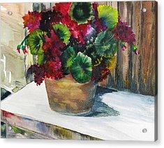 Rustic Geraniums Acrylic Print by Arry Murphey