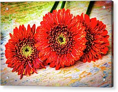 Rustic Red Dasies Acrylic Print by Garry Gay