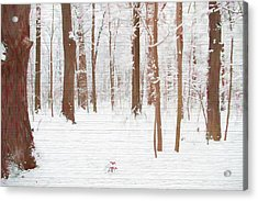 Rustic Winter Forest Acrylic Print by Dan Sproul