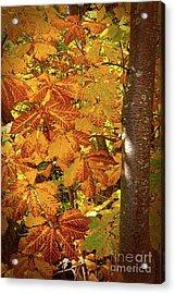 Rusty Autumn Fall Color Leaves In The Blue Ridge Acrylic Print by Dan Carmichael