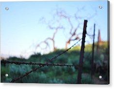 Acrylic Print featuring the photograph Rusty Gate Rural Tree 2 by Matt Harang
