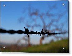 Acrylic Print featuring the photograph Rusty Gate Rural Tree by Matt Harang