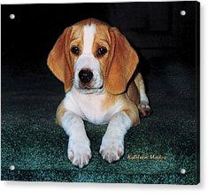 Rusty Puppy Acrylic Print