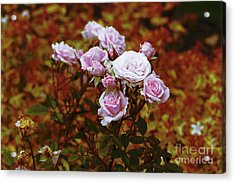 Rusty Romance In Pink Acrylic Print