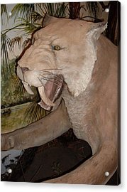 Saber Tooth Tiger Acrylic Print by Warren Thompson