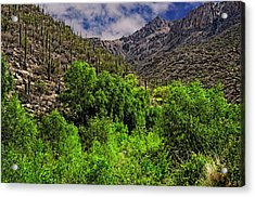 Acrylic Print featuring the photograph Sabino Canyon H33 by Mark Myhaver