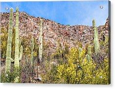 Sabino Canyon 7 Acrylic Print