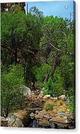 Acrylic Print featuring the photograph Sabino Canyon V49 by Mark Myhaver