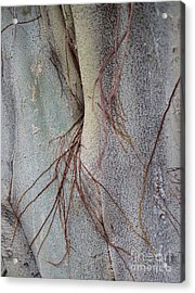 Sacred Bodhi Tree Detail With Red Creeper Vines Acrylic Print
