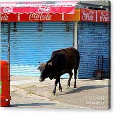 Acrylic Print featuring the photograph Sacred Cow 1 by Randall Weidner