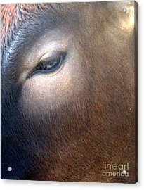 Acrylic Print featuring the photograph Sacred Cow 5 by Randall Weidner