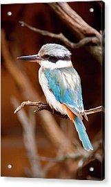 Sacred Kingfisher Acrylic Print