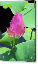 Sacred Pink Acrylic Print by Inspirational Photo Creations Audrey Woods