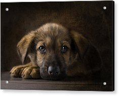 Sad Puppy Acrylic Print by Bob Nolin