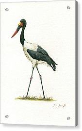 Saddle Billed Stork Acrylic Print