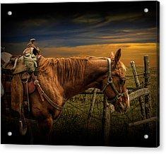 Saddle Horse On The Prairie Acrylic Print