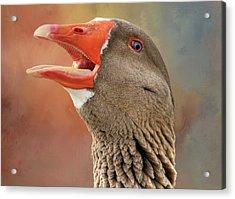 Saddleback Pomeranian Goose Acrylic Print