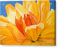 Saffron Splendour Acrylic Print by Colleen Brown