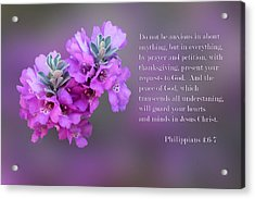 Sage Blossoms Philippians 4 Vs 6-7 Acrylic Print