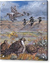 Sage Grouse Watch The Migration Acrylic Print by Dawn Senior-Trask