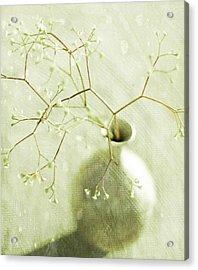 Sage  Acrylic Print