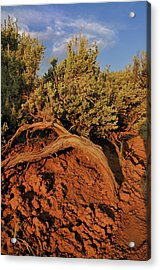 Sagebrush At Sunset Acrylic Print